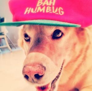 RockyBahHumbug